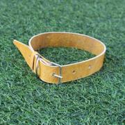 Vòng cổ thú cưng 40cm (Vàng)