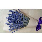 Bó 100 Bông Hoa Oải Hương Lavender Khô Tự Nhiên