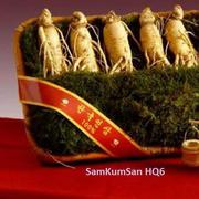 Nhân sâm tươi cao cấp Hàn Quốc 6 củ trên kg - SamKumsan HQ6