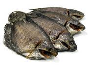 Cá sặc An Giang (6-8 con/kg)