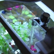 Bể Cá Mini Đa Năng (Trắng)