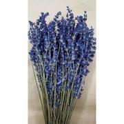 Bó Hoa Khô Oải Hương Lavender 250-300 Cành