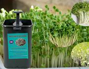 Thiết bị làm giá đỗ GV102 phiên bản 1, cho rau giá sạch để bảo vệ sức khỏe